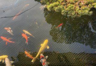 鯉のBabys (゜))<<